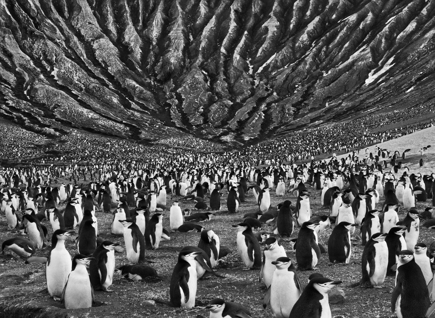 """A colony of chinstrap penguins mills about at the foot of Mount Michael, an active volcano in the South Sandwich Islands, in the far South Atlantic, where erosion has cut the volcanic ash into eerie crevices. """"These landscapes are as alive as I am,"""" says Salgado. """"One day I was walking around rocks near a volcano that were one day old. They had justbecome solid."""