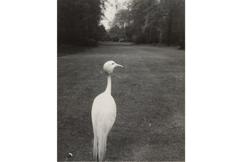 Evening in Kew Gardens, 1935