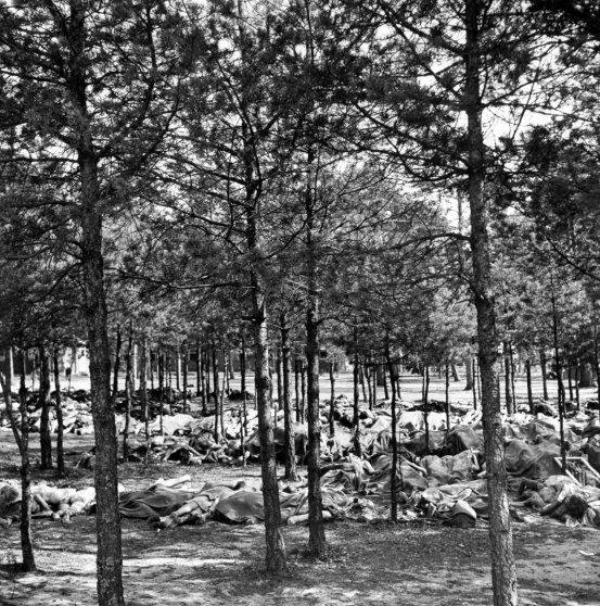 Hundreds of corpses on the ground beneath trees at Bergen-Belsen concentration camp, April 1945.