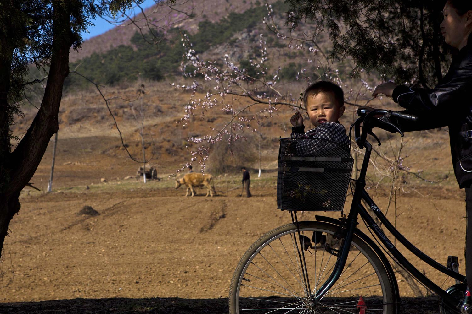 April 24, 2013. A North Korean boy rides in a bicycle's basket on a road north of Kaesong, North Korea.