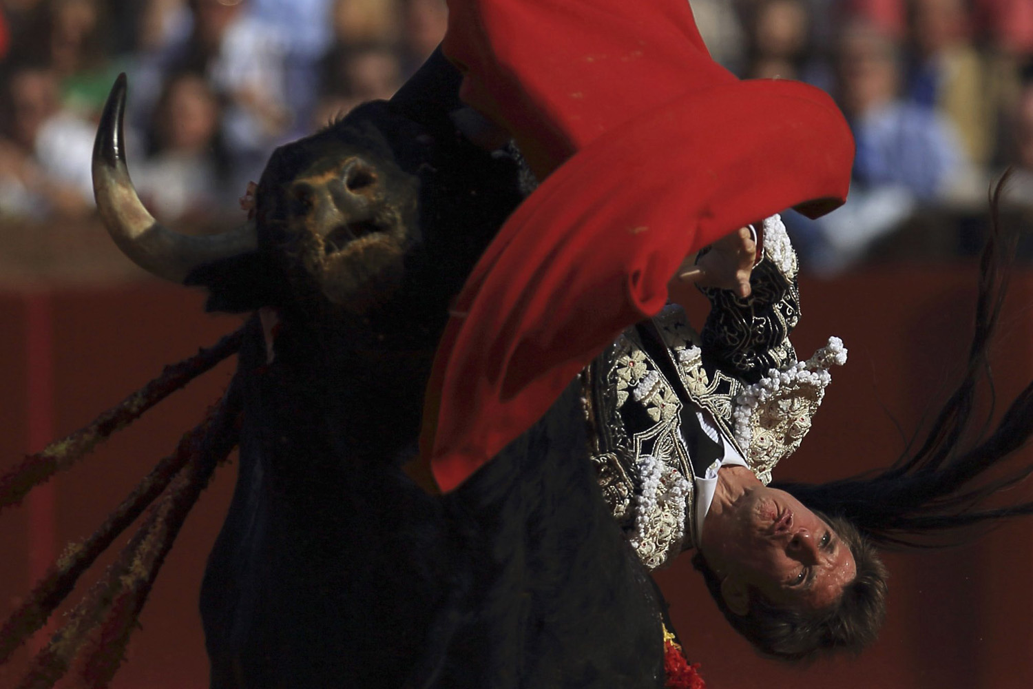 April 19, 2013. Spanish matador Julian Lopez  El Juli  is gored by a bull during a bullfight at The Maestranza bullring in the Andalusian capital of Seville, southern Spain.