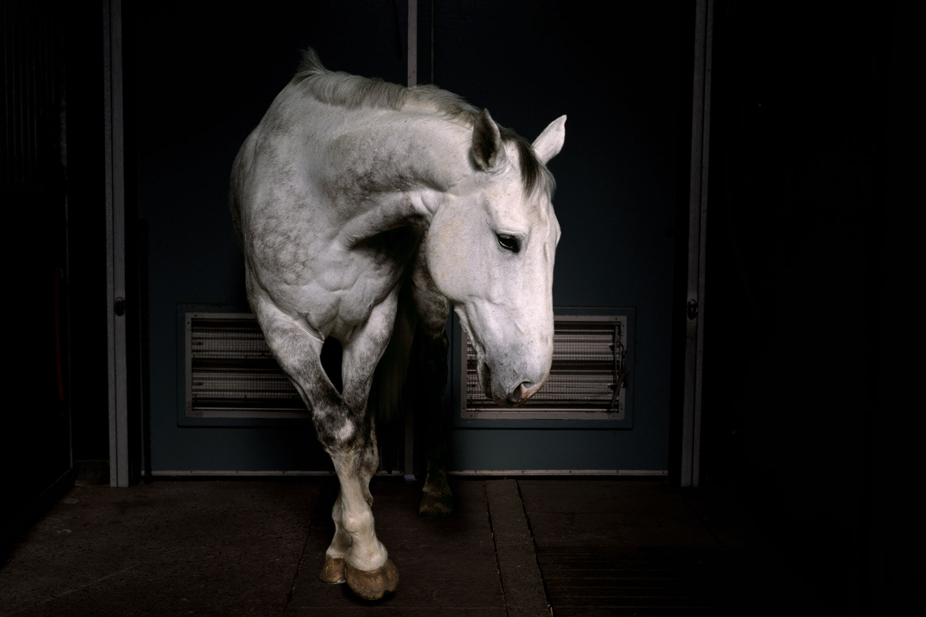 Horses can lapse into apparent depression when they lose a companion.