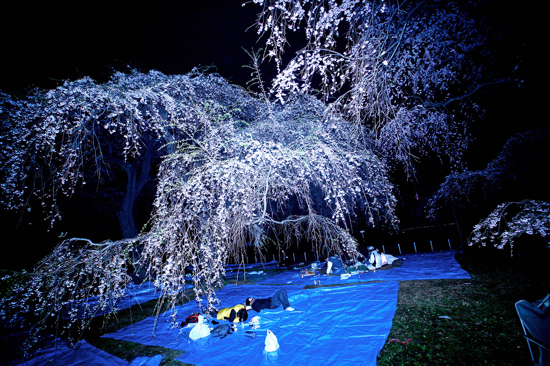 Blue Spring, 2007