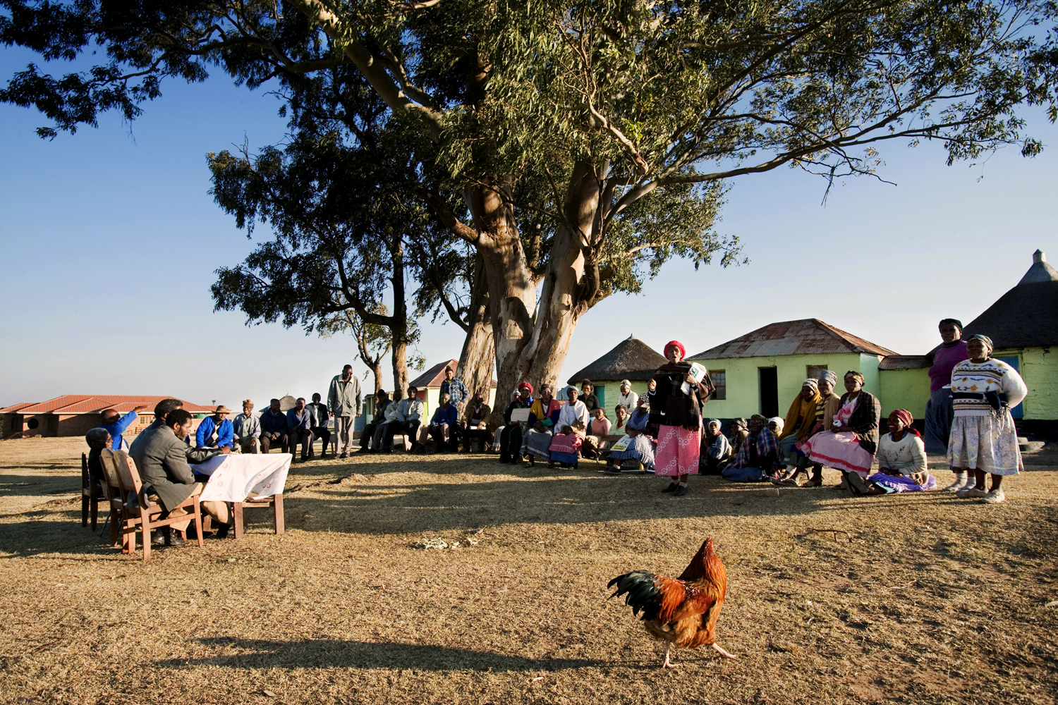 Having been adopted at age nine by a Thambu chief and raised in this village, Mandela has said that it is underneath this tree where he learned the value of consensus politics, as each Wednesday evening the community would gather with the village elders to discuss the issues at hand. Everyone was given an opportunity to speak.