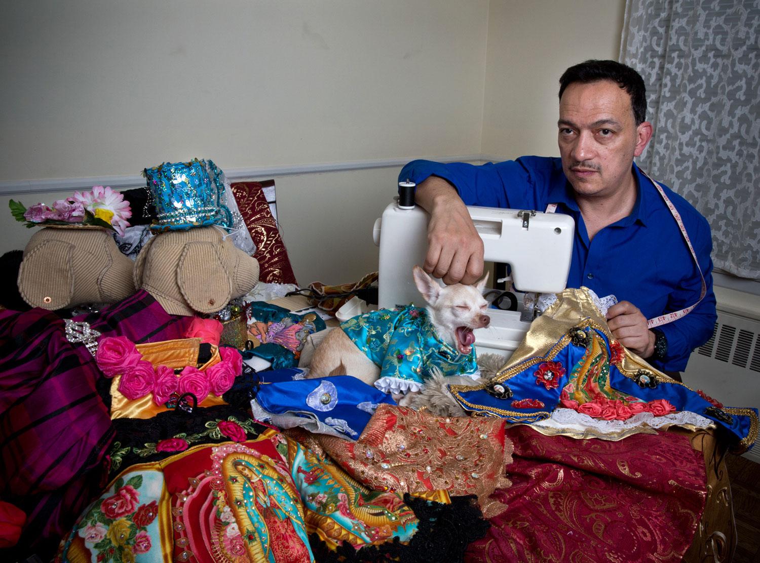 Anthony Rubio and his Chihuahua, Kimba, sewing couture for the upcoming Wigglebutt Wedding to benefit Cocker Spaniel Rescue.