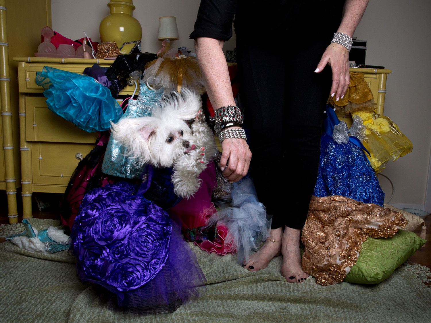 ZZ, a Maltipoo, companion to Ilene Zeins, at home in Brooklyn, N.Y. wearing Olga Yuditsky for Orostani Couture for Haute Doggies.