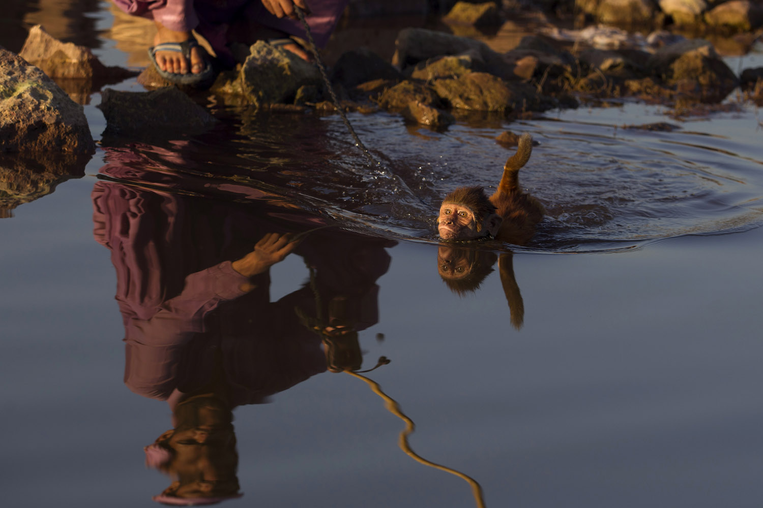 May 31, 2013. Pakistani monkey handler Naseer helps his monkey to plunge in water to beat the heat in Islamabad, where temperatures reached 106 degrees Fahrenheit.