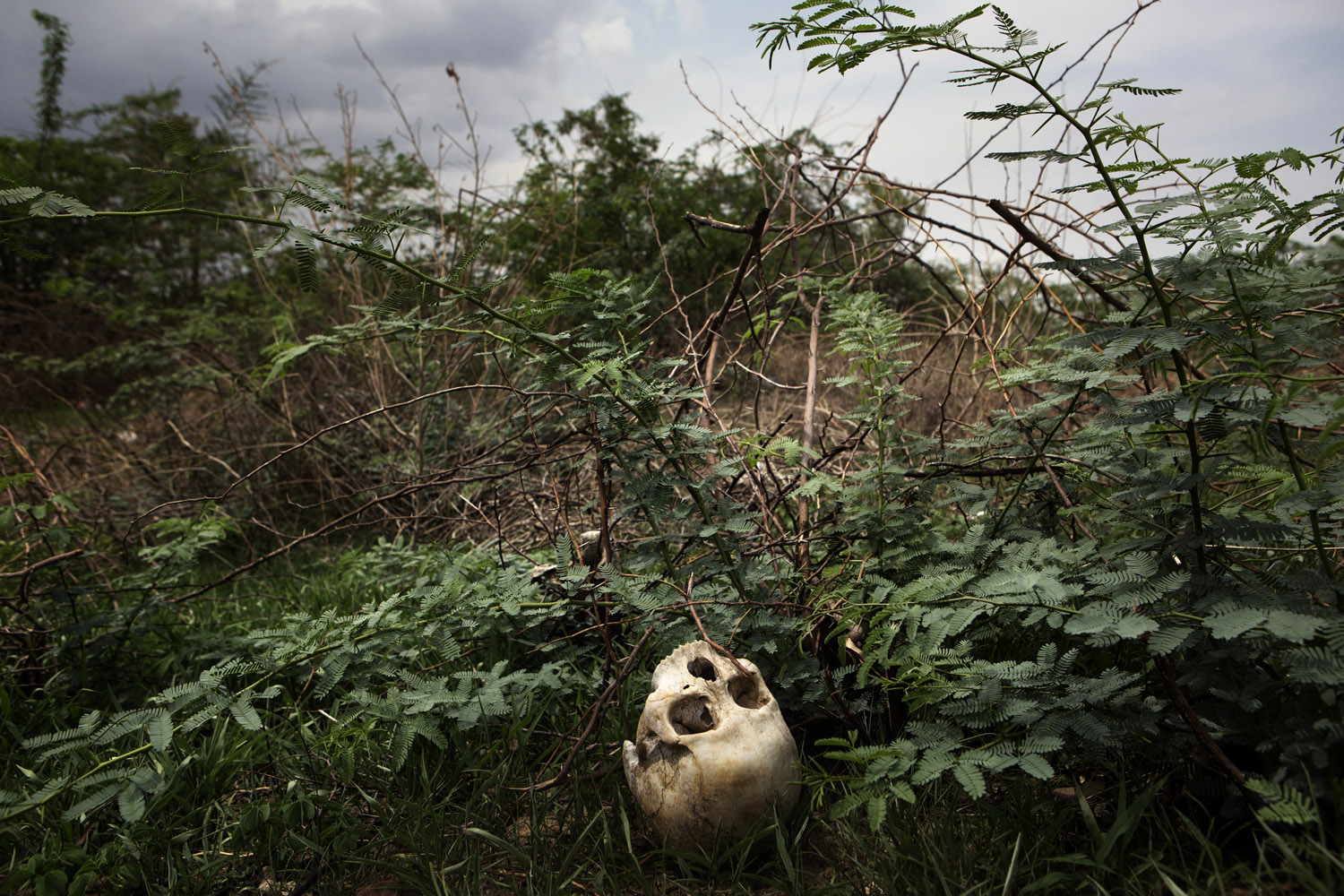 A skull on the ground near a Buddhist graveyard, which appears to have been recently desecrated in Meikhtila, Burma.