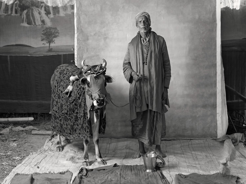 Holy (ritualistic) brahmin with deformed cow, earning $20 per week, 2012