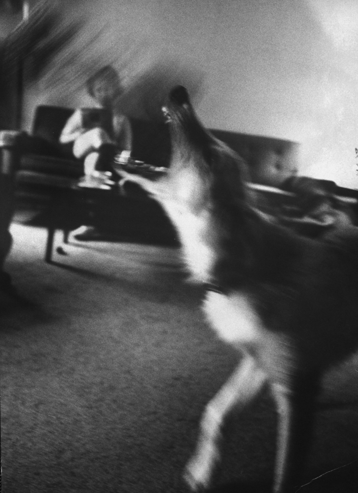 Dog training for attack during Boston stranglings scare, 1963.