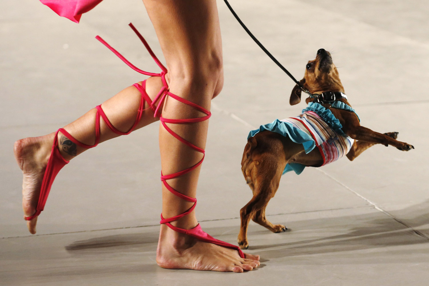Sept. 20, 2013. A model walks with a dog presenting a creation by designers Karen Reichardt and Mariela Schiavo during the so-called  2013 Spring-Summer Caribbean Colour Paws  show in Buenos Aires.