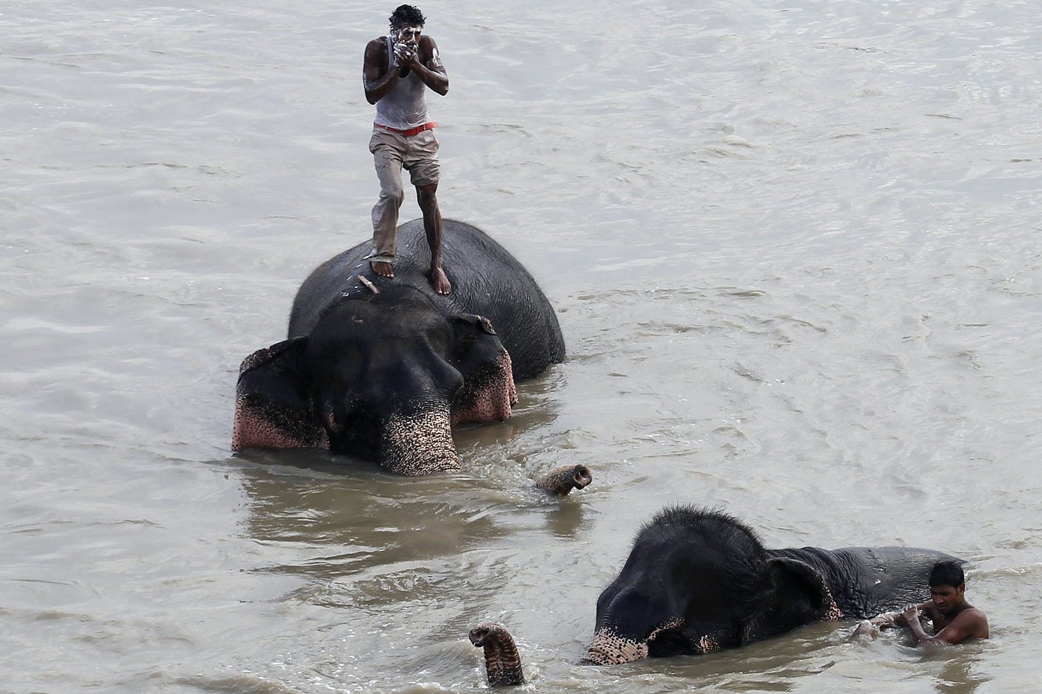 Sept. 25, 2013.  A mahout bathes as he stands atop his elephant in the waters of the Yamuna river in New Delhi.