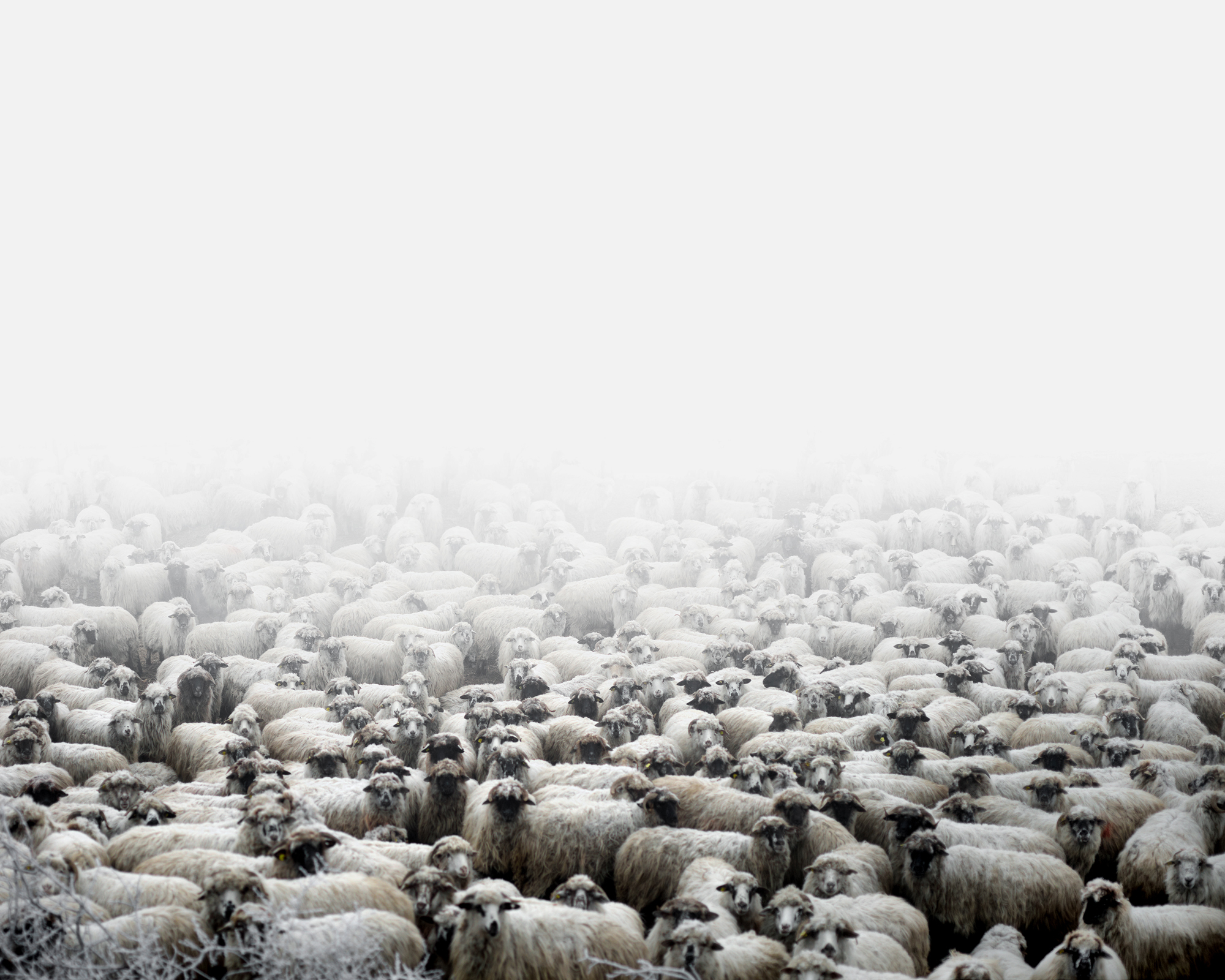 Sheep farm (Silvasu de Sus, West Romania), 2011