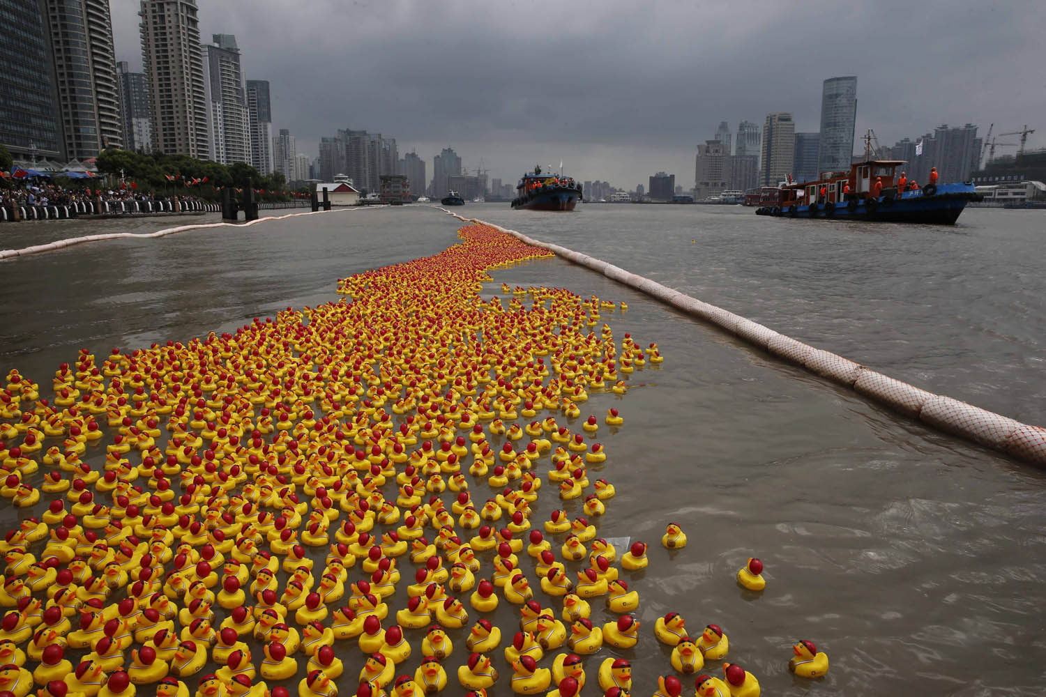 Oct. 5, 2013. Rubber ducks, all wearing swimming caps and Special Olympic gold medals, drift down Huangpu River in a charity event in Shanghai.