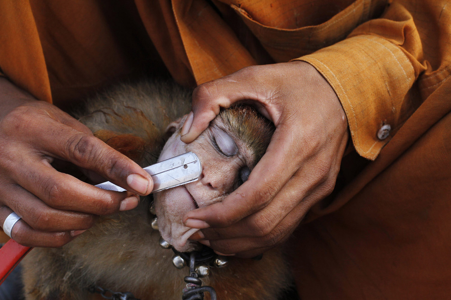 Oct. 7, 2013. A man shaves his monkey with a razor before it performs tricks for money in Lahore, Pakistan.