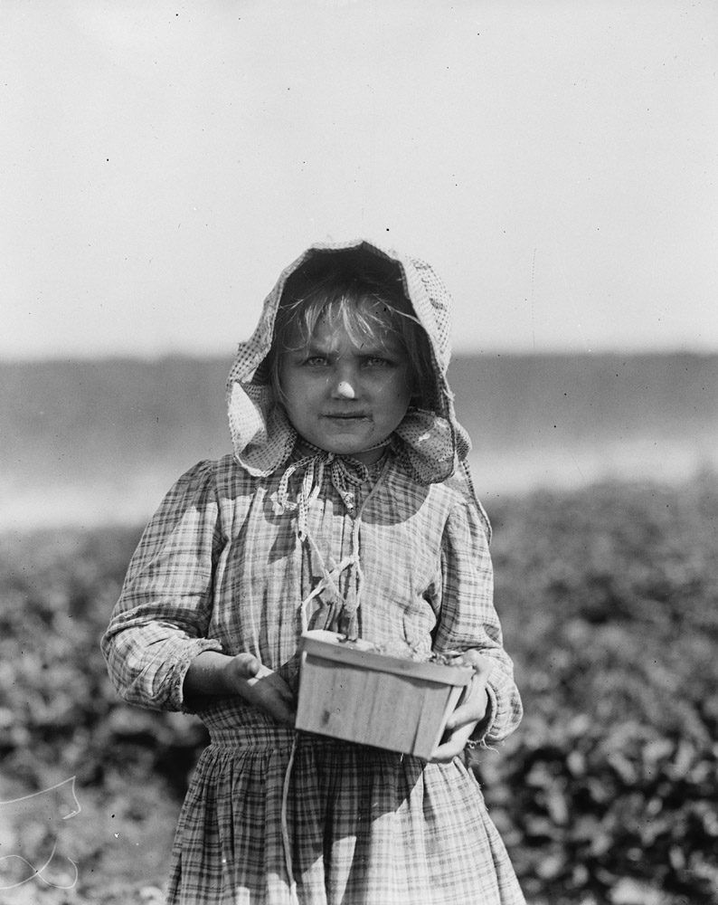 Alberta McNatt, berry picker on farm, about six years old, Cannon, Delaware, 1910.                                Alberta McNadd on Chester Truitt's farm at Cannon, Del. Alberta is 5 years of age and has been picking berries since she was 3. Her mother volunteered the information that she picks steadily from sun-up to sun-down.  —Hine's original caption                               She had started working at five o'clock in the morning, and was found by Lewis Hine still picking berries at four o'clock in the afternoon. She married at the age of 17, and died six months later.
