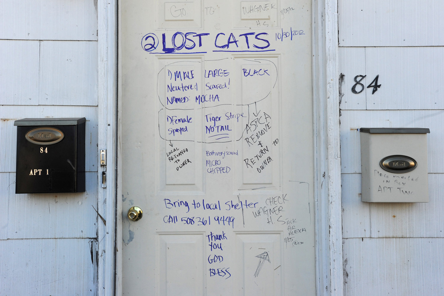 Notice of lost cats, updated when they were found, New Dorp Avenue, Staten Island, N.Y., 2012