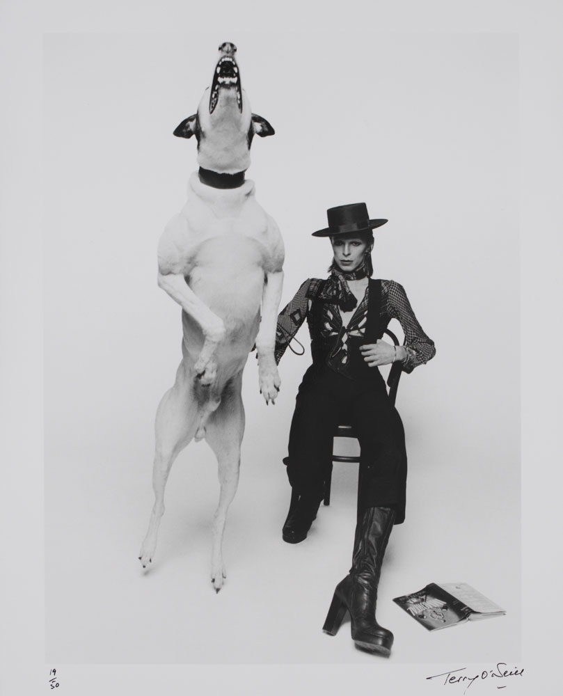 Exhibition.  David Bowie is  Art Gallery of Ontario, Toronto, Canada. September 25 - November 27, 2013. Pictured: Promotional photograph of David Bowie for 'Diamond Dogs,' 1974.