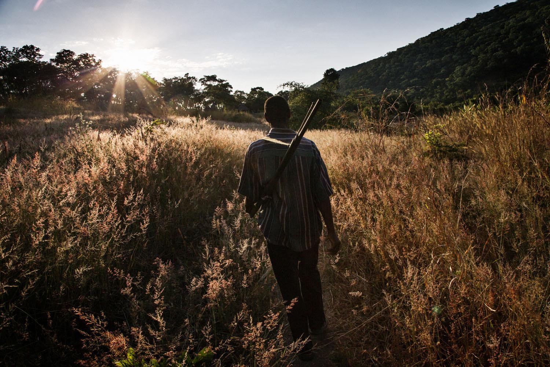 May 18, 2013. A man carries a gun while walking through a field in Zambia.