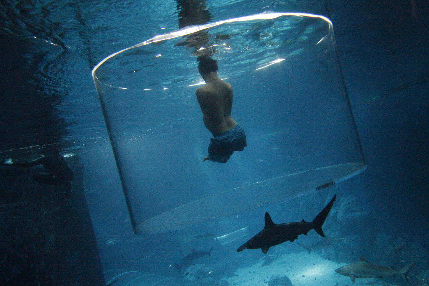 Sept. 5, 2013. Nick Vujicic, an Australian motivational speaker who was born without limbs, swims with sharks at the Marine Life Park in Singapore.