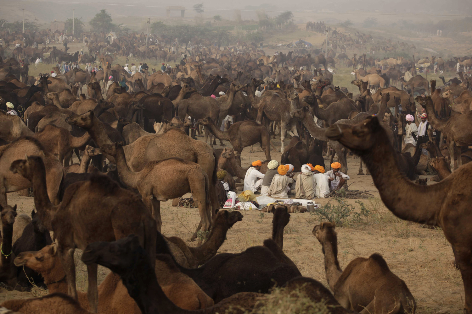 Nov. 10, 2013. Indian camel herders sit near their camels during the annual cattle fair in Pushkar, in the western Indian state of Rajasthan, India.