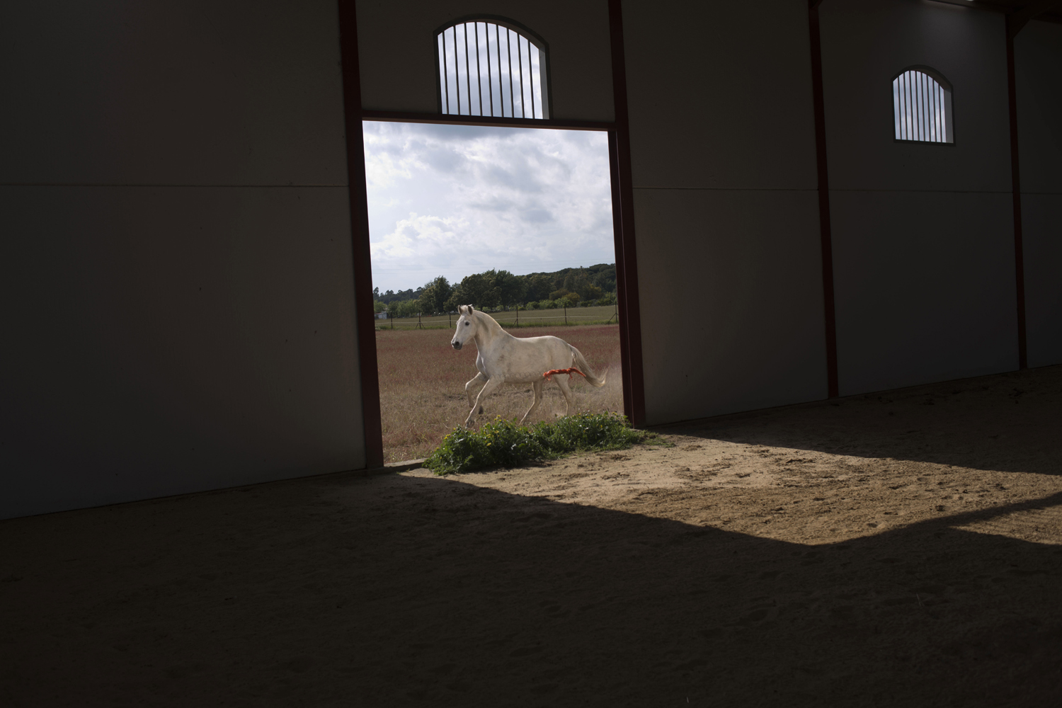 April 8, 2013. A ''Pura Raza Espanola'' or Pure Spanish Breed mare belonging to breeder Francisco Jose Rodriguez runs next to the stable at  La Yeguada de Cuatro Vientos  ranch in Almonte, in the southern Spanish region of Andalusia.