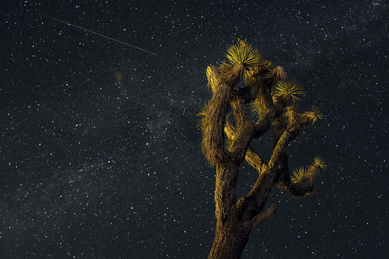 Aug. 12, 2013. A Perseid streaks across the sky over the Mojave Desert in Landers, Calif.