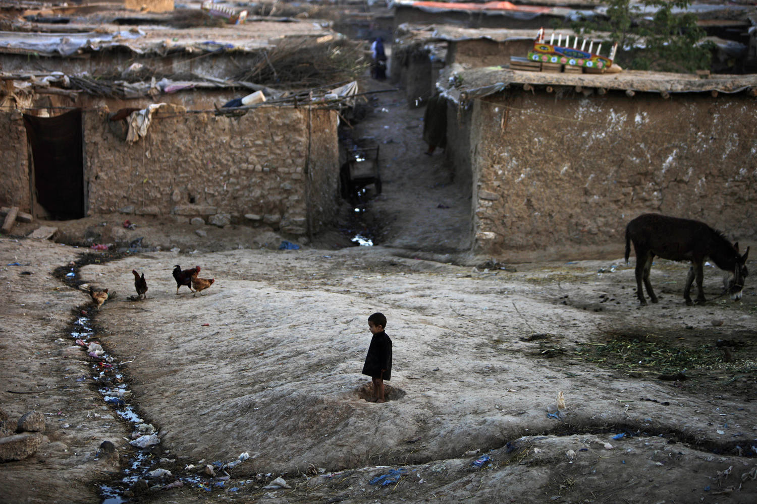 March 21, 2013. An Afghan refugee boy watches chickens feeding in a neighborhood on the outskirts of Islamabad.