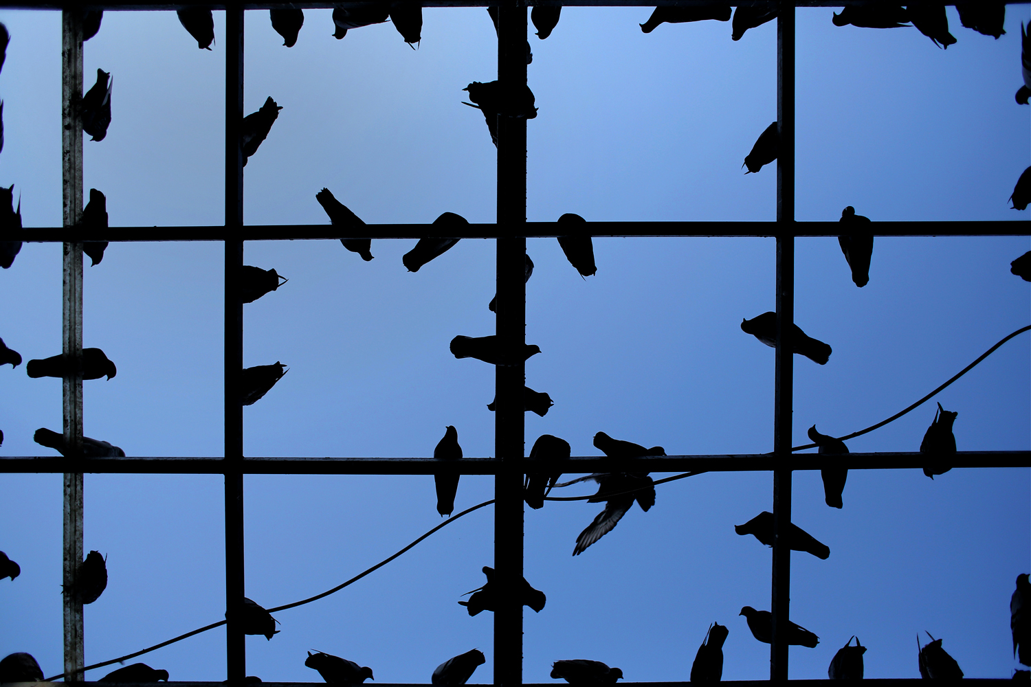 Oct. 15, 2013. Pigeons rest on a metallic structure at Kotzia square, in front of Athens' city hall.
