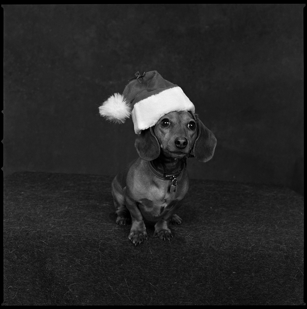 2002: Christmas                       An adorable dachshund.