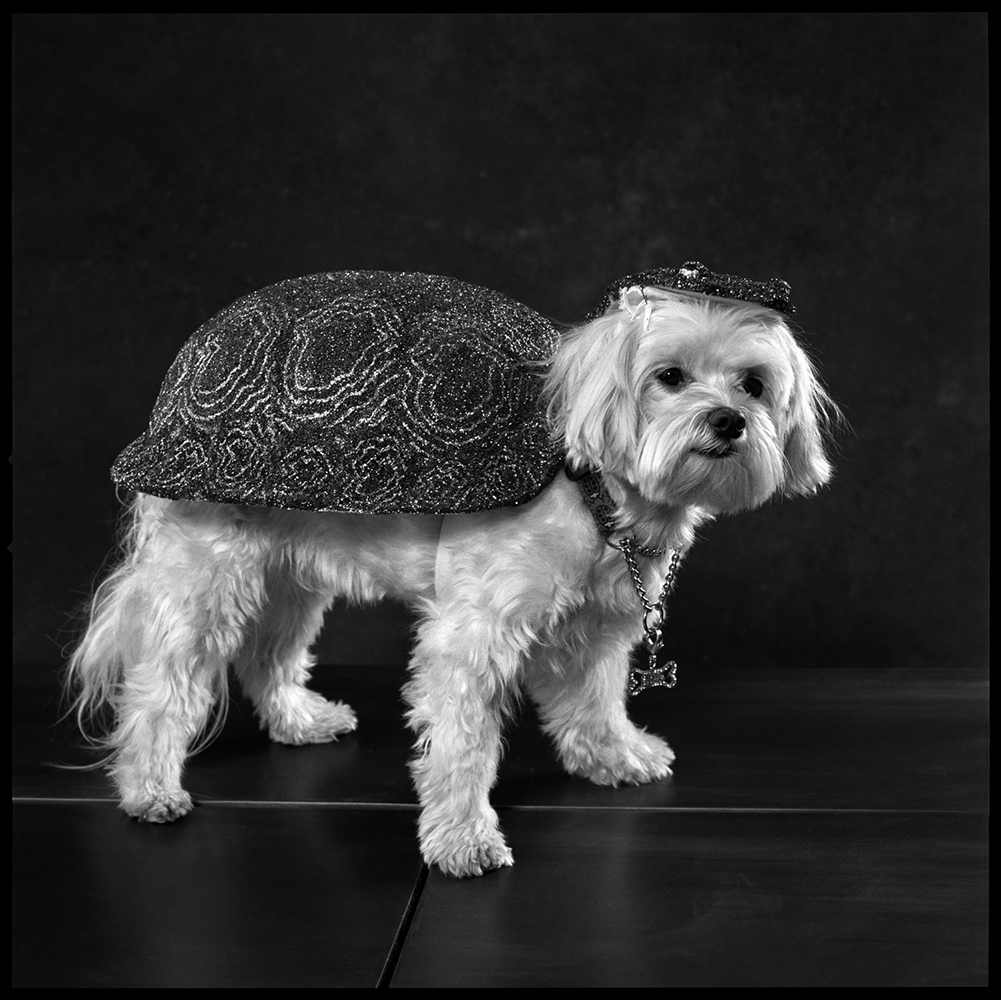 <b>2006: Zoo (Dogs Dressed as Different Animals)</b><i>Ruby Tuesday is dressed as a turtle.</i>
