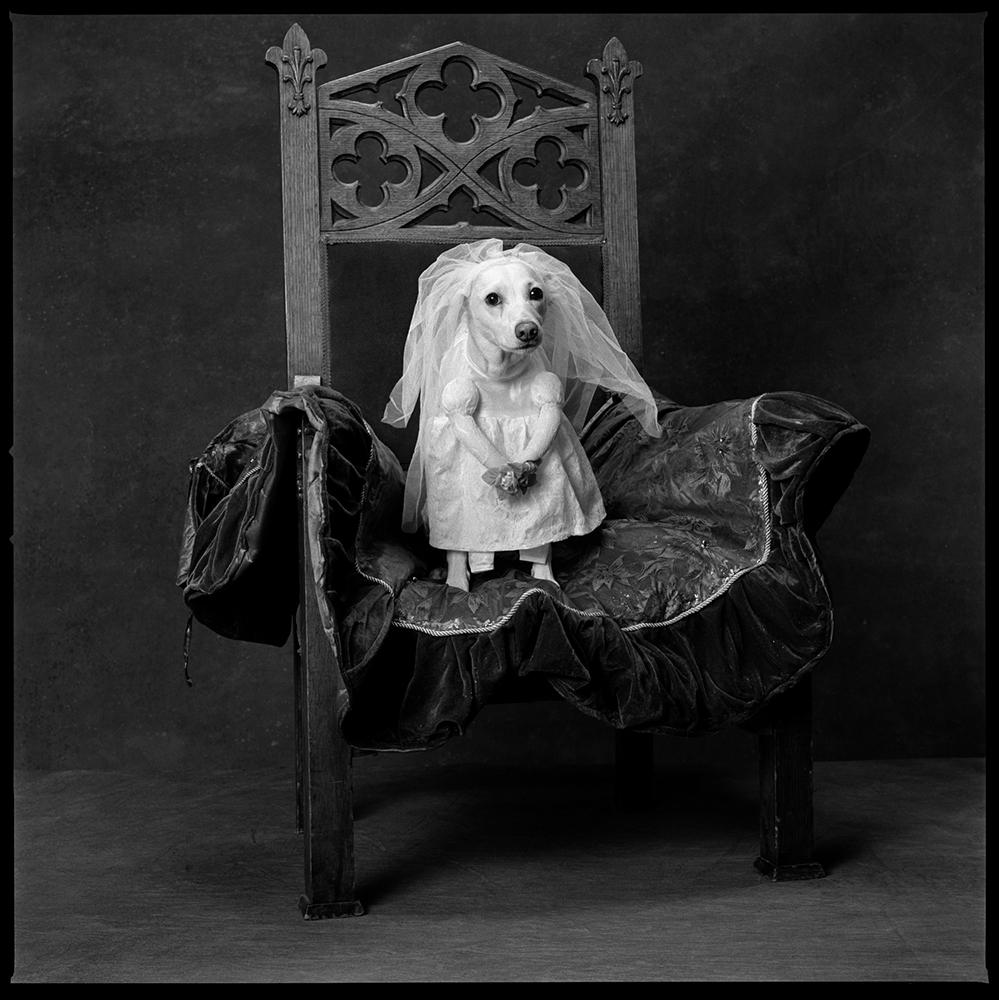 2010: Royal WeddingBuster in a wedding dress.