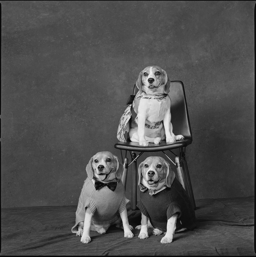 <b>2012: Couture</b><i>These three beagles are my favorite. Their names are Henry Hudson, Cindy Sherman and Bert.</i>