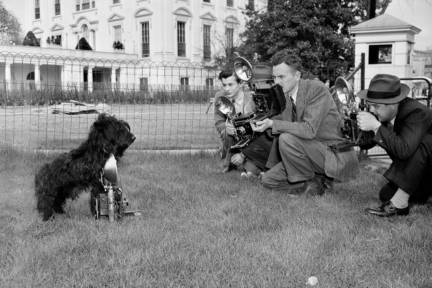 Fala, the pet Scottie of President Franklin Delano Roosevelt, poses for photographers outside of the White House, April 7, 1942.