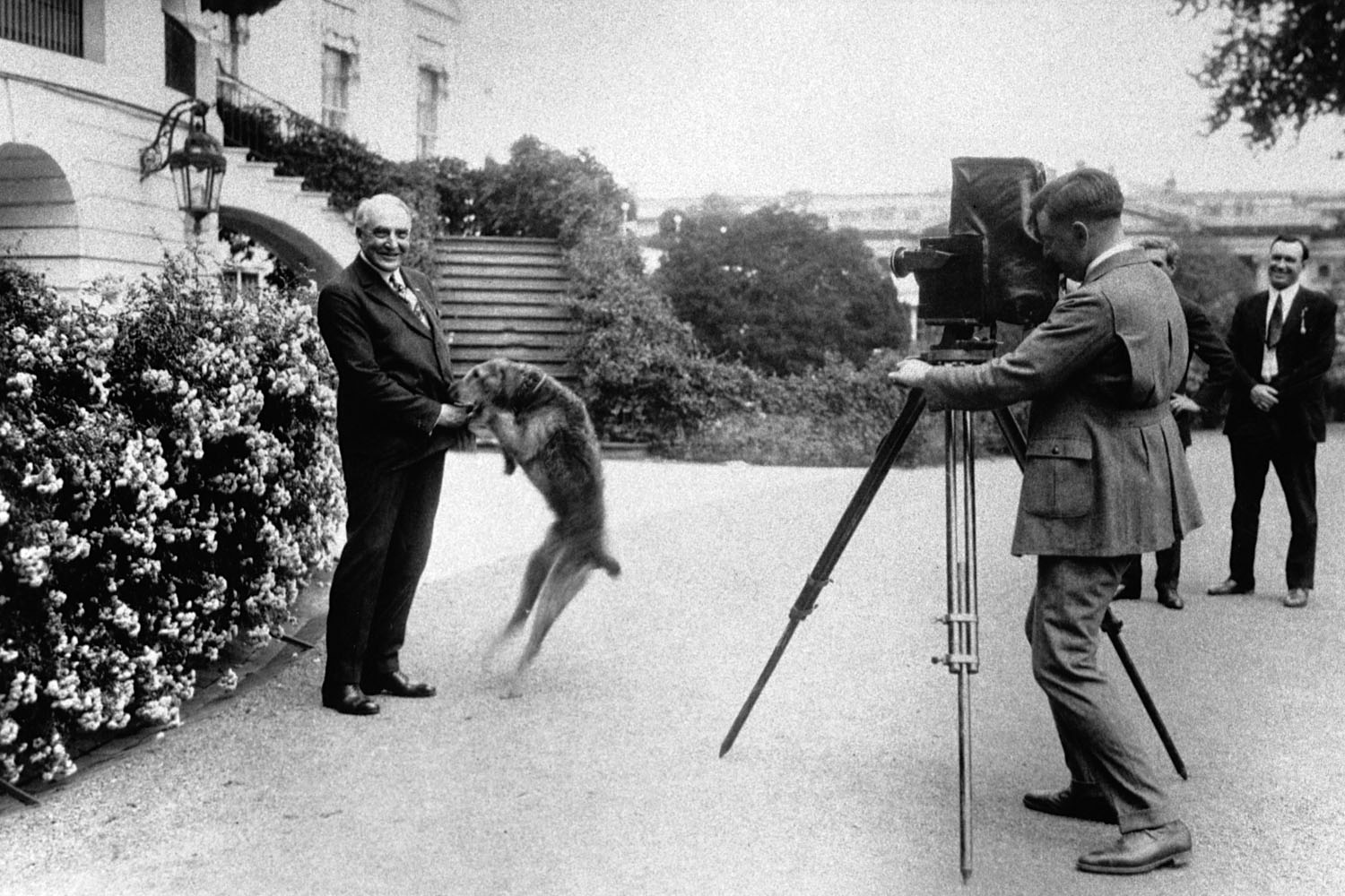 President Warren G. Harding plays with his dog Laddie in front of the White House, June 13, 1922.