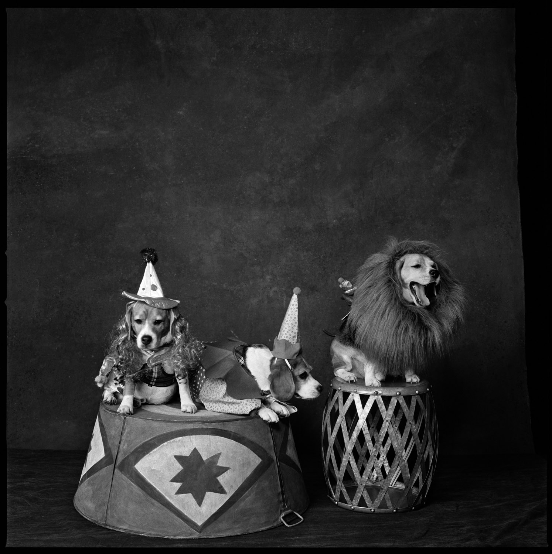 2013: Circus DogsHenry Hudson, Cindy Sherman and Bert.