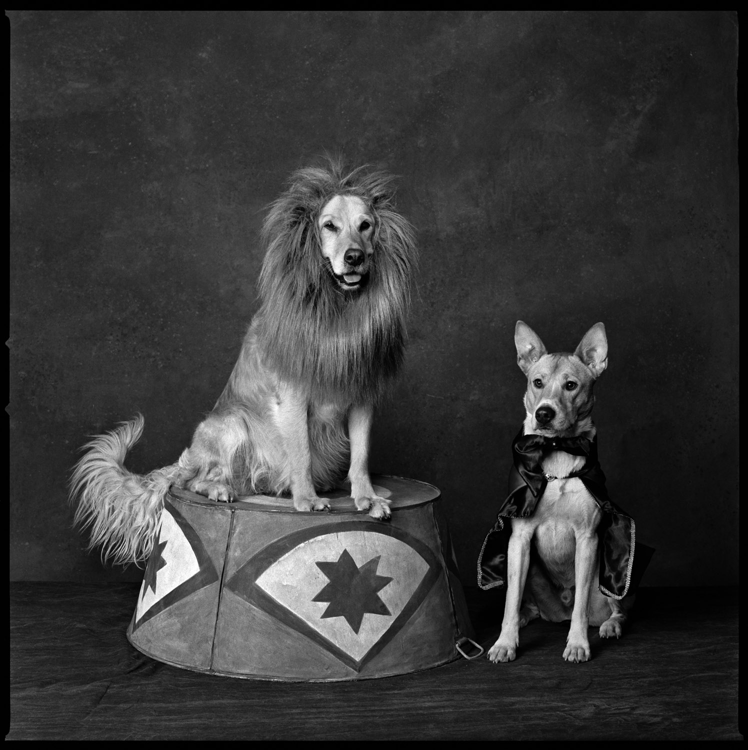 <b>2013: Circus Dogs</b><i>Gracie, a lion, with her trainer, Georgie.</i>