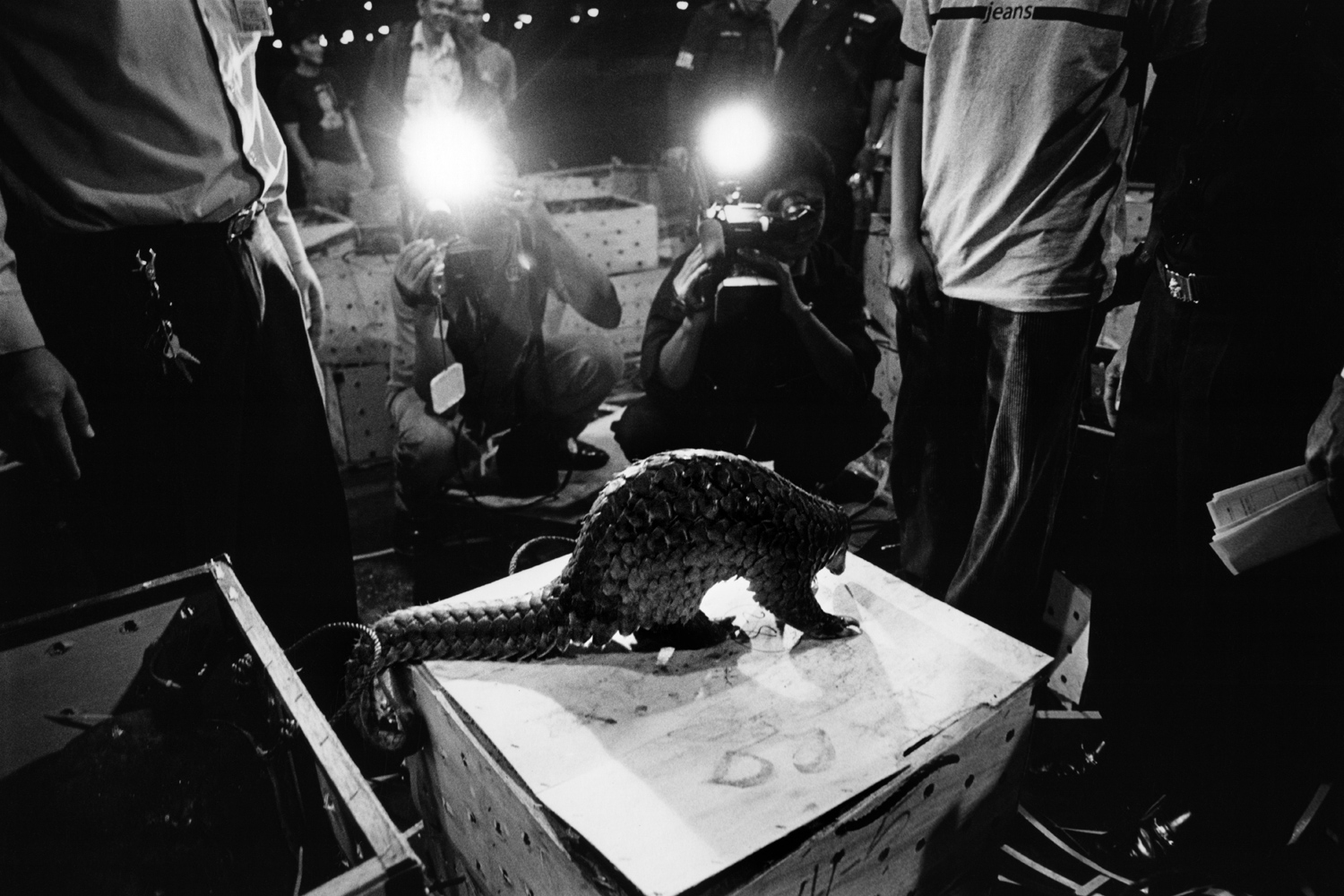 Bangkok, Thailand                                                                                             Journalists are invited to photograph a shipment of pangolins intercepted at Bangkok's international airport as part of a crackdown on trafficking in wild animals. Pangolins are considered a delicacy in parts of Asia and prized for their use in traditional medicine and as an aphrodisiac.