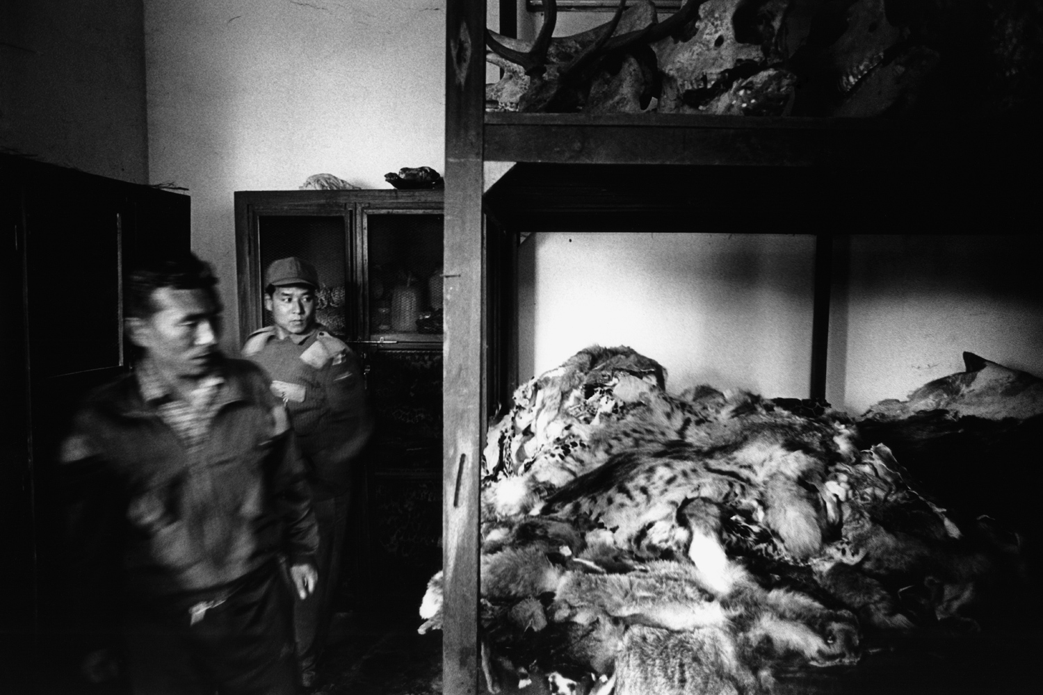 The following images, taken between 2002 and 2012, are from Patrick Brown's new book  Trading to Extinction.                                                                                               Nepal: A group of Royal Forestry Department officers display seized tiger and snow leopard skins at the barracks of Chitwan National Park. The 5 year old stockpile has an estimated value of $750,000 USD.