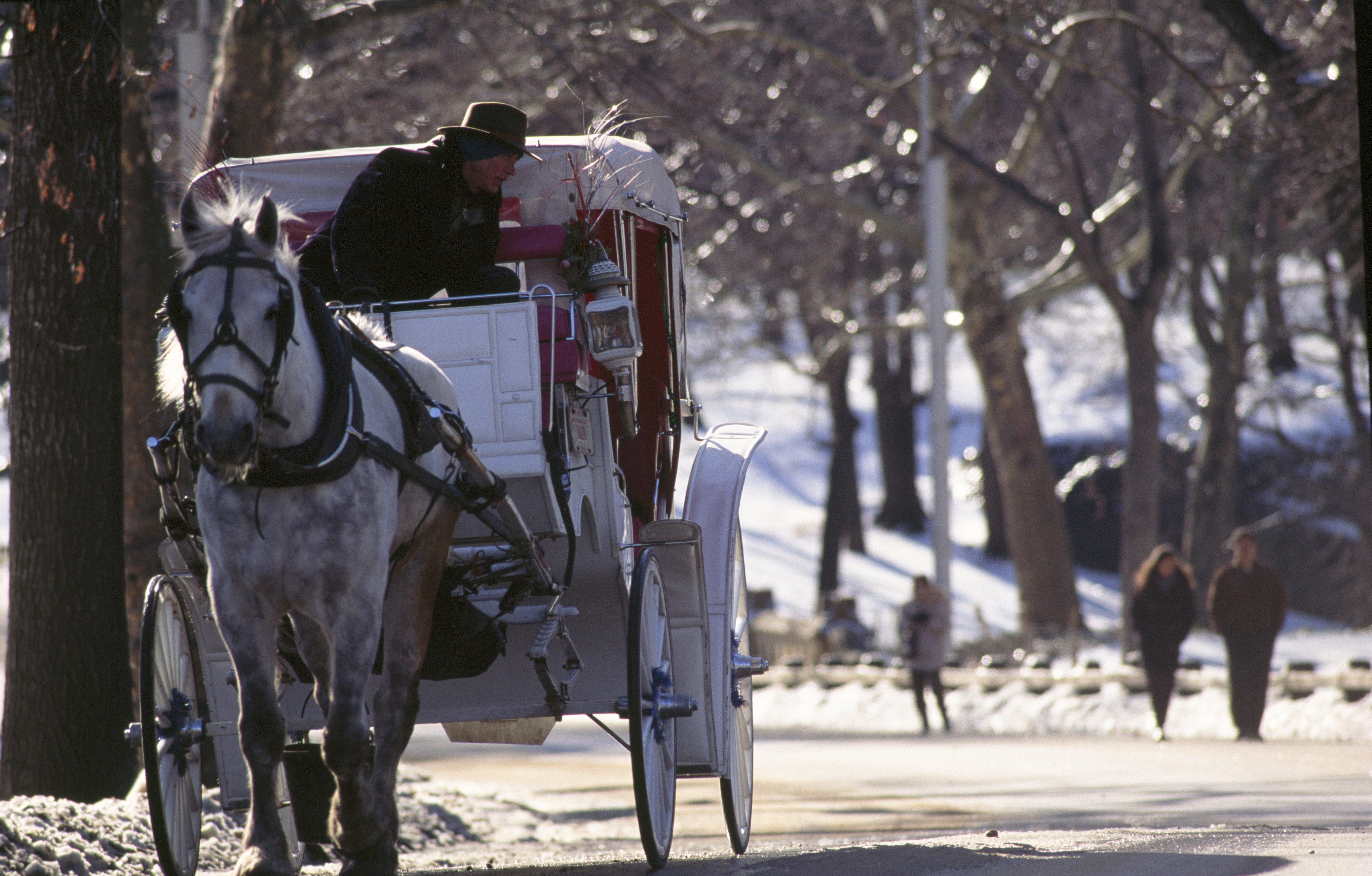 USA, New York City,  Horsedrawn carriage in Central Park