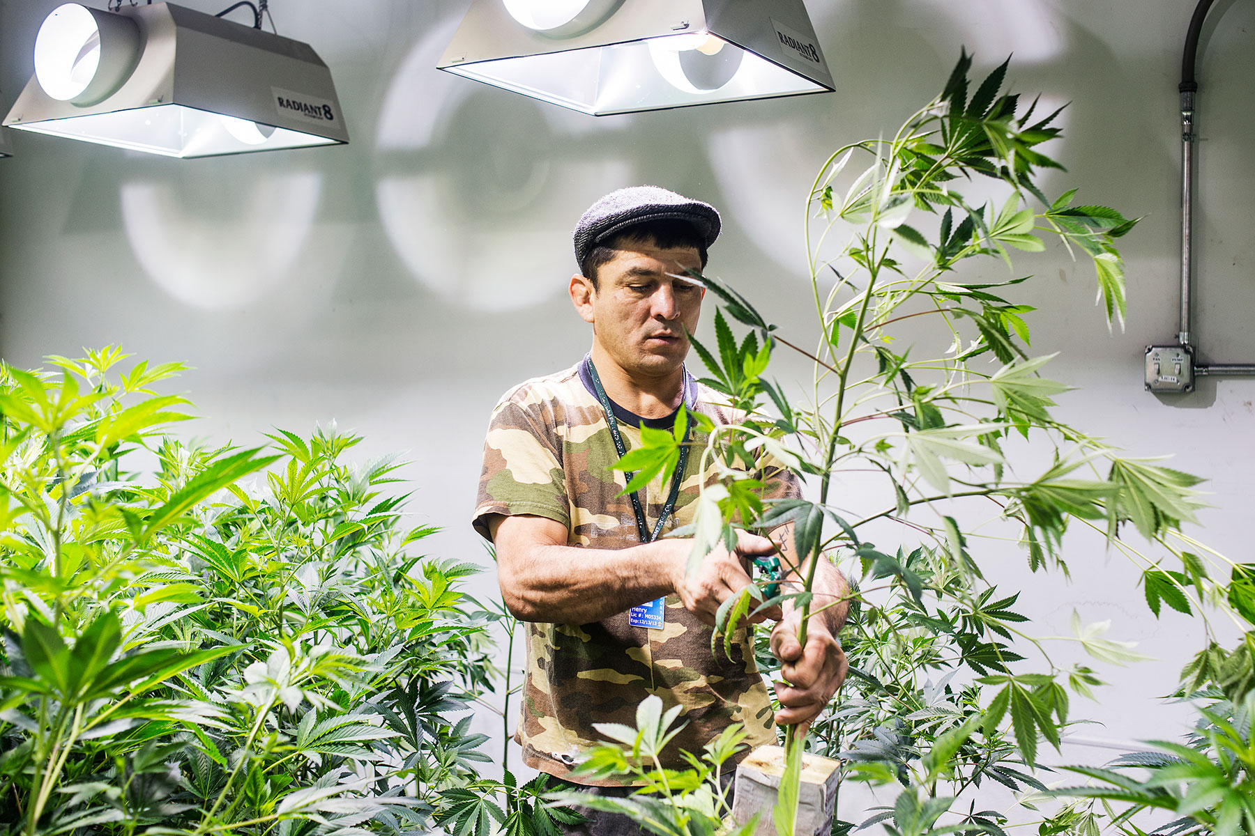 Colorado requires pot shops like Medicine Man to grow 70% of their product.