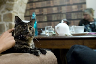 Customers enjoy a beverage as a cat relaxes on an armchair at the  Cafe des Chats  days before the inauguration in Paris