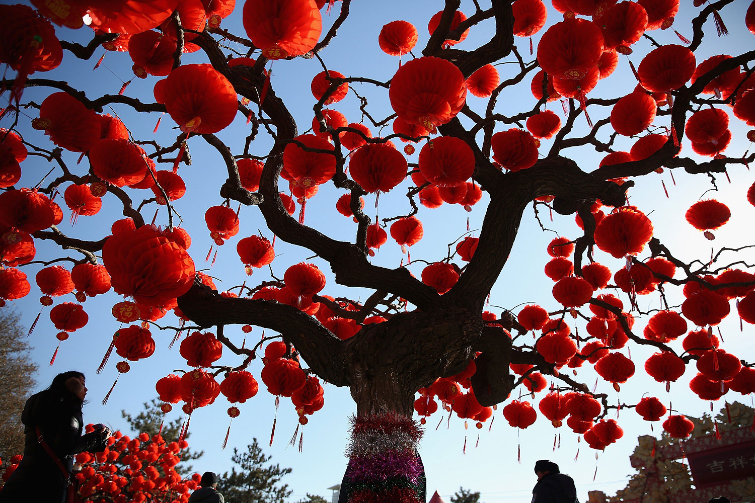 A Visitor passes the trees decorated with red lanterns at the Spring Festival Temple Fair for celebrating Chinese Lunar New Year of Horse at the Temple of Earth park on Jan. 30, 2014 in Beijing.