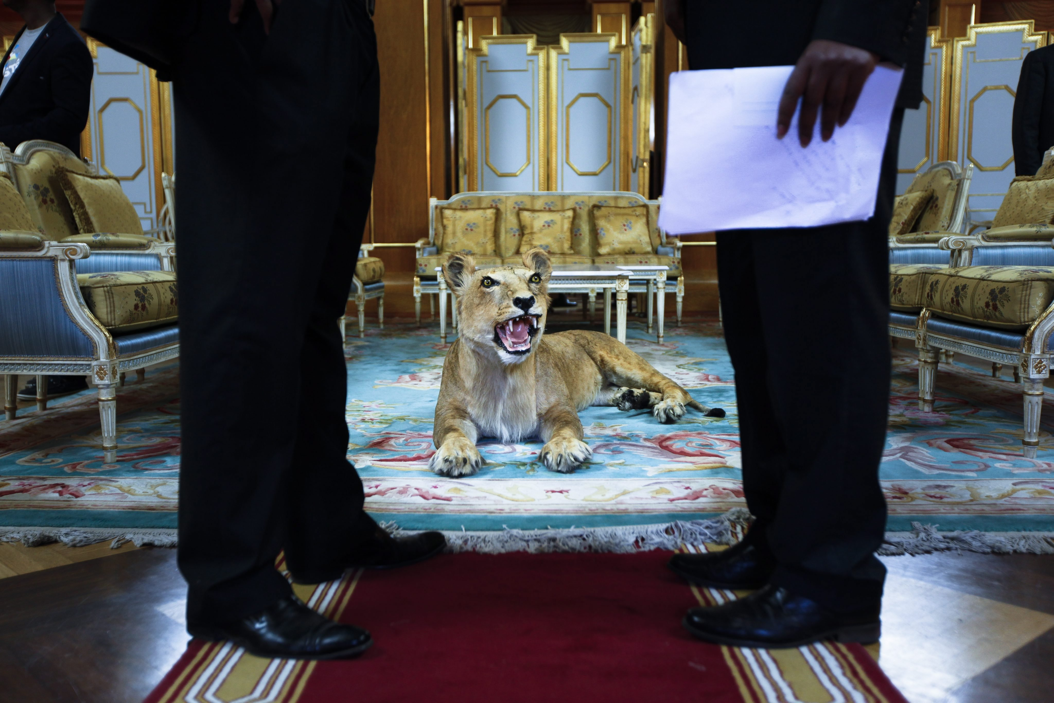 A stuffed lion on display is seen between two Ethiopian officials prior to a meeting between Japanese Prime Minister, Shinzo Abe, and his Ethiopian counterpart, Hailemariam Desalegn, at the Presidential Palace in Addis Ababa, Ethiopia, Jan. 13,2014.