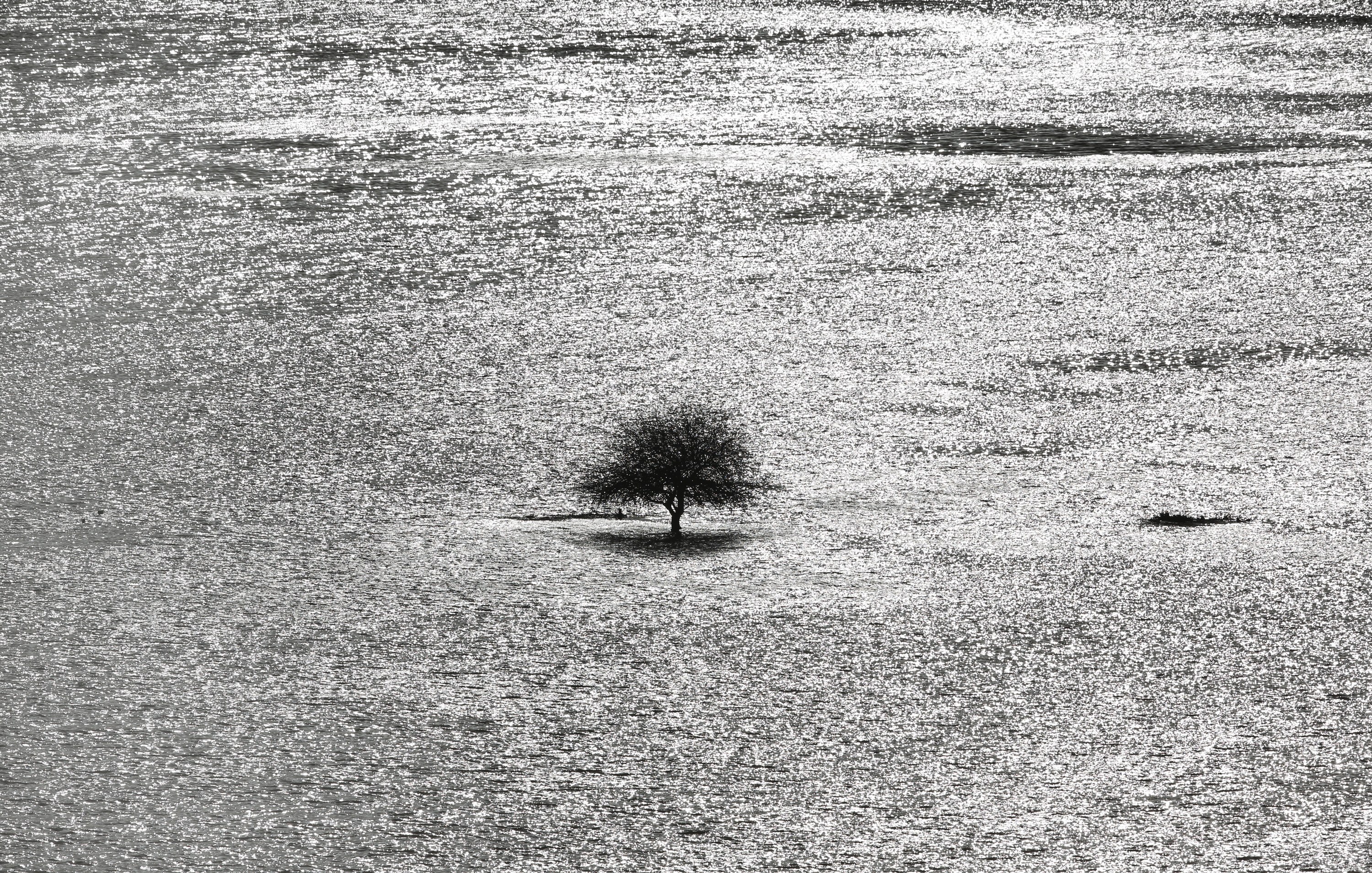 A lone tree stands in a snowy field in Hovel, England, Jan. 6, 2014.