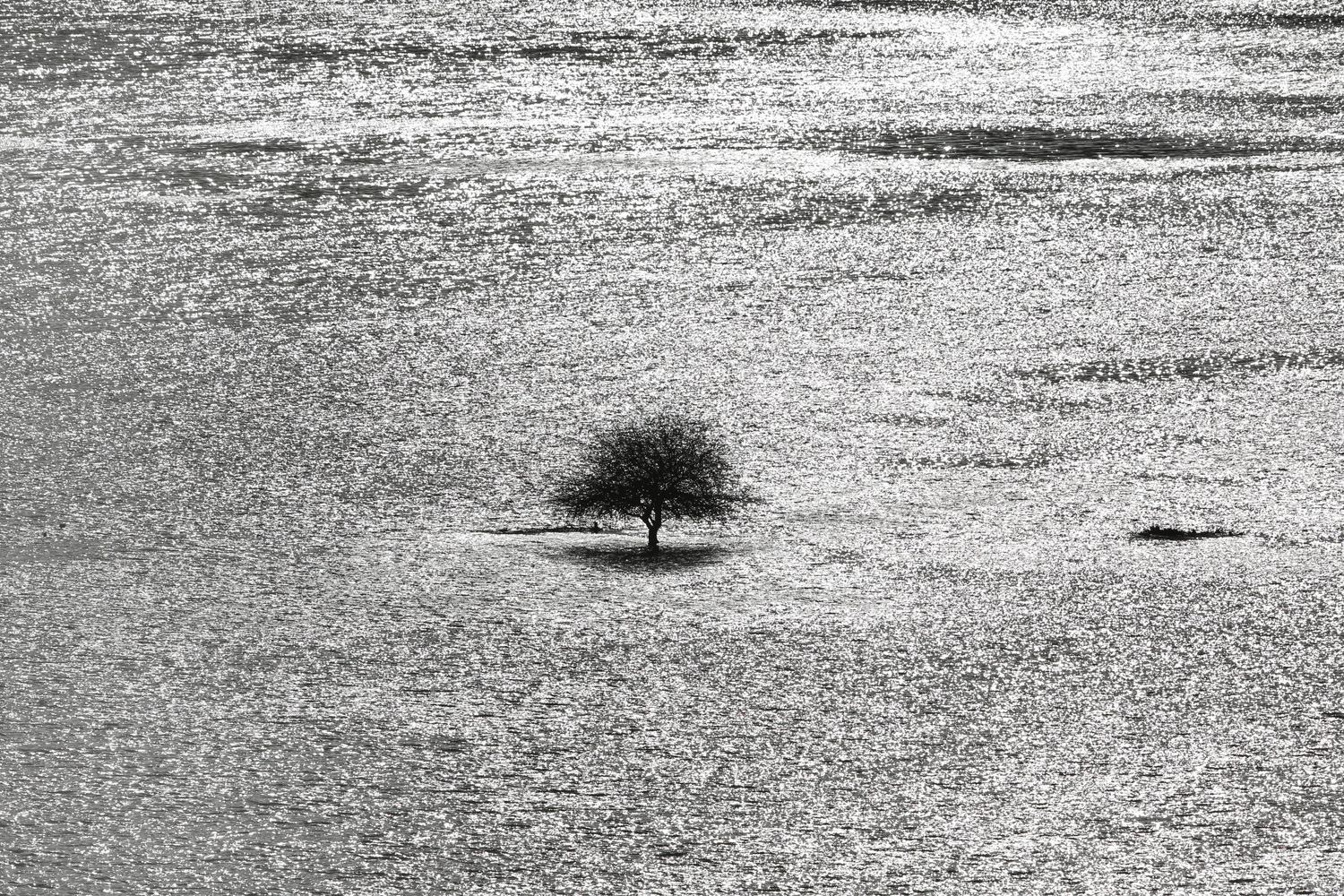 Jan. 6, 2014. A lone tree stands in flood water from the river Arun near Arundel, England.