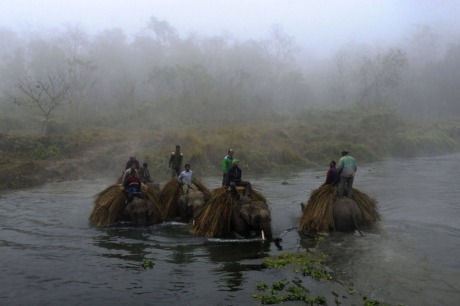 Dec. 28, 2013. Nepalese mahouts guide their elephants across the Rapati river at Sauraha in Chitwan, some 150 km southwest of Kathmandu, during the Chitwan Elephant Festival.
