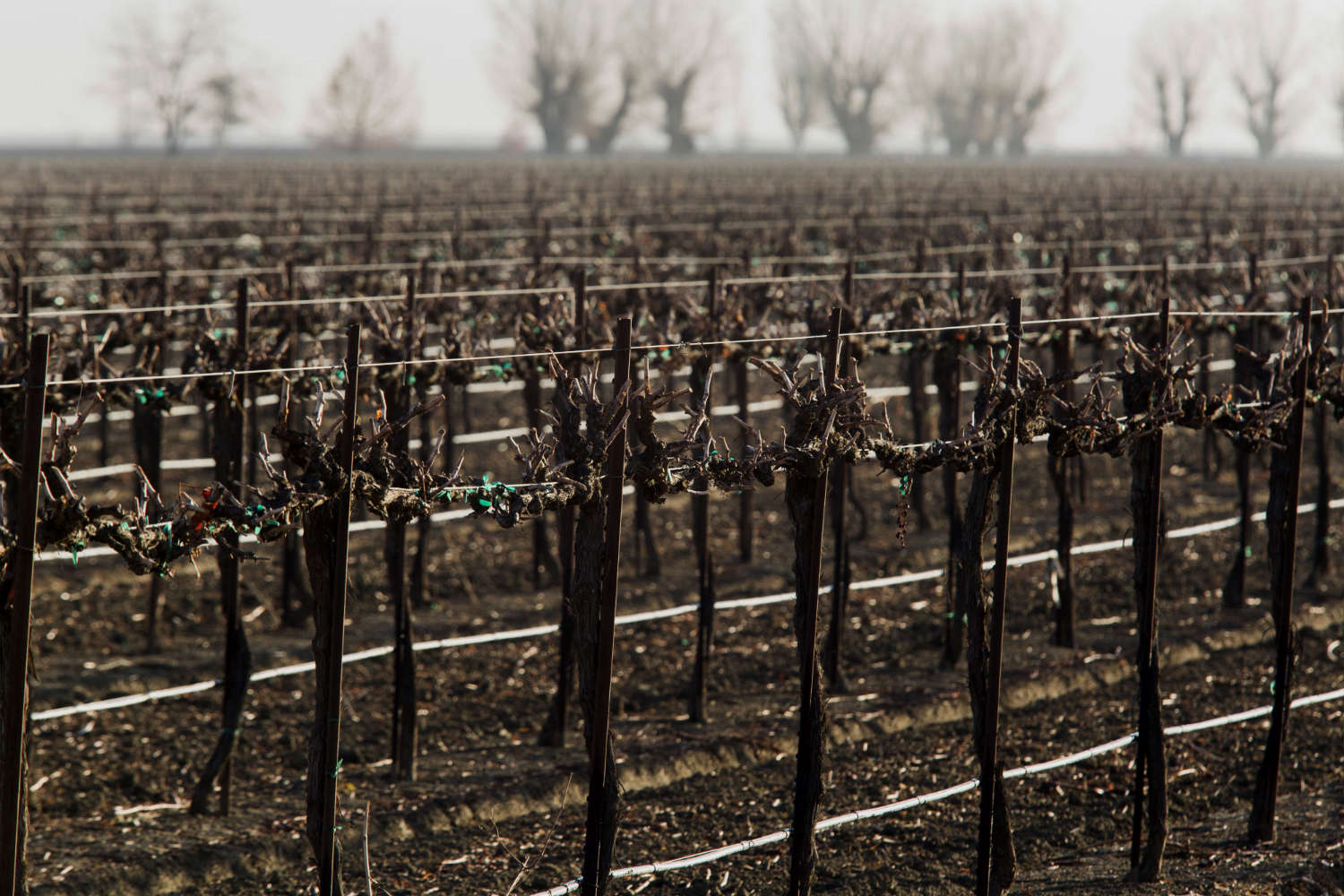 California's farms have been hard hit by the drought