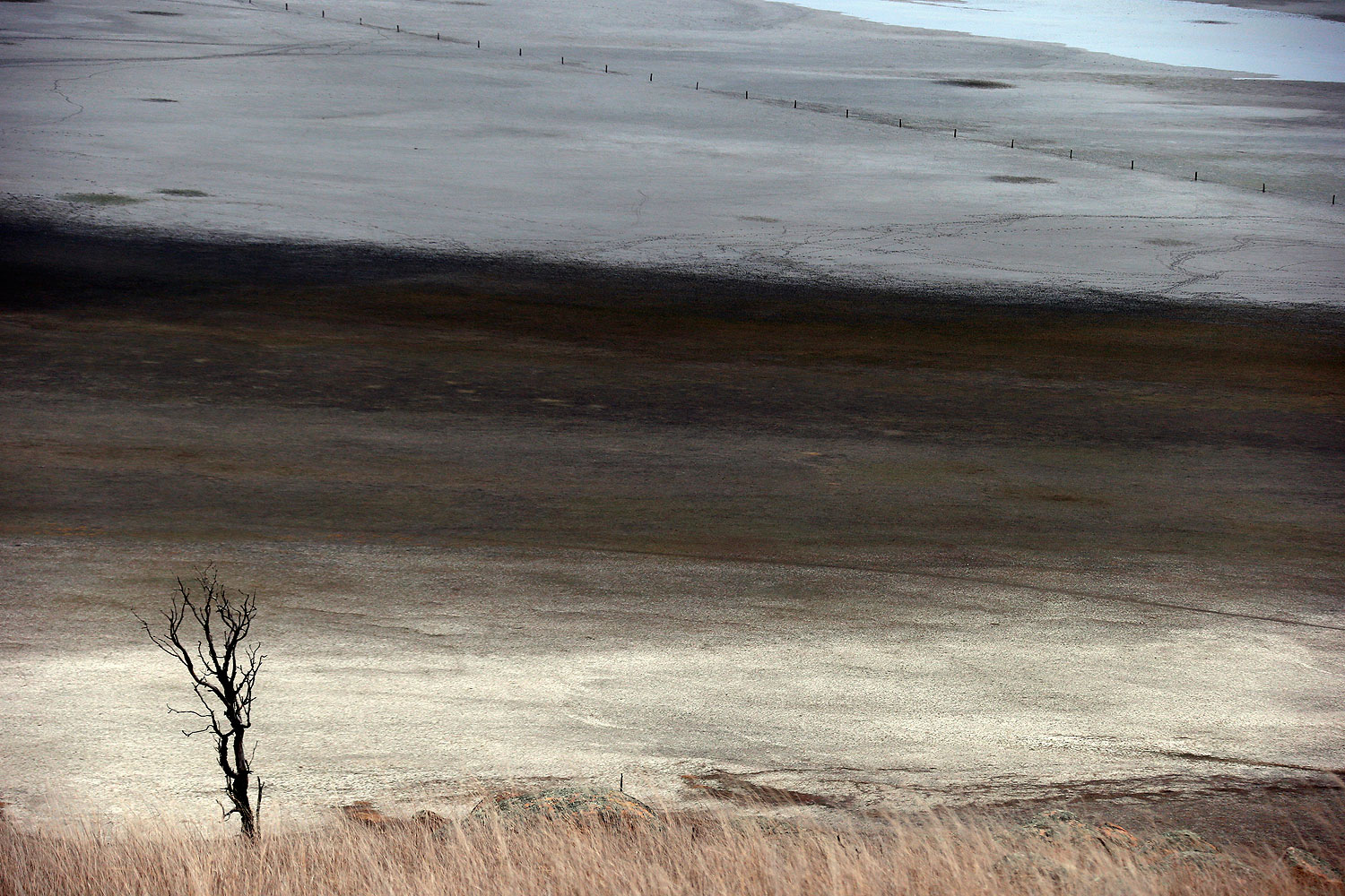 A dead tree stands in front of shallow water and a dried-up area of Lake George, located 50 km (31 miles) north of the Australian capital city of Canberra May 13, 2013