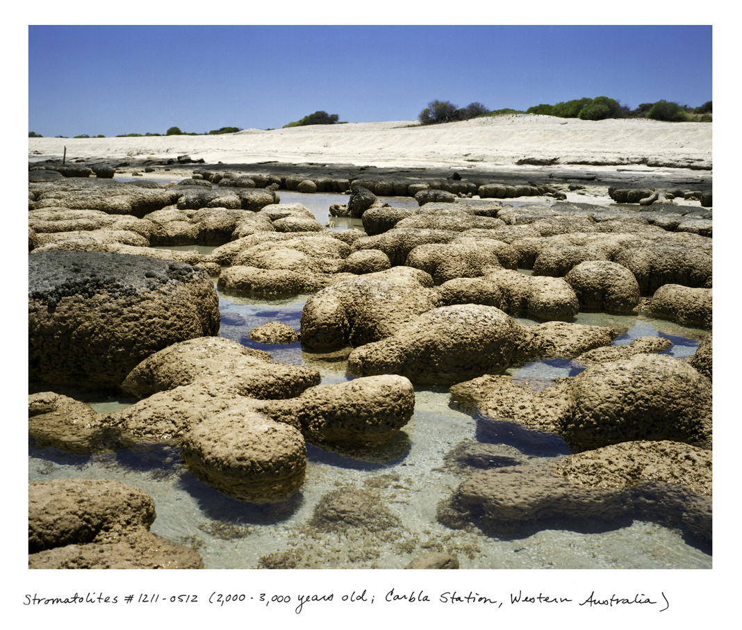Straddling the biologic and the geologic, stromatolites are bound cyanobacteria; organisms that are tied to the oxygenation of the planet that began 3.5 billion years ago, setting the stage for the rest of all life on Earth.